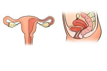 col de l'utérus